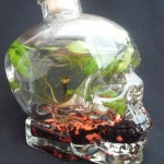 Skull vodka Aquarium