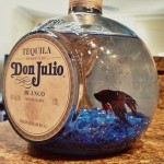 Don Julio Aqurium