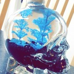 skull bottle fish aqurium